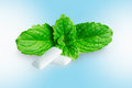 Chewing gum with fresh mint leaves Royalty Free Stock Photo