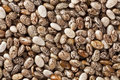 Chia seeds at 2x life-size magnification Royalty Free Stock Photography
