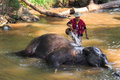 Chiangmai ,Thailand - November 16 : mahout take a bath elephant