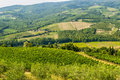 Chianti landscape near Radda, with vineyards and olive trees Royalty Free Stock Photo