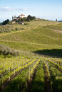 Chianti vineyard slopes in a gentle slope with road and traditional farmhouse in the background Royalty Free Stock Photo
