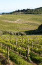 Chianti vineyard slopes in a gentle slope with road and wood in the background Royalty Free Stock Photos
