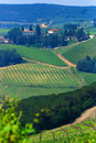 Chianti Vineyards Royalty Free Stock Photo