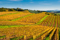 Chianti wine region vineyards, Tuscany Royalty Free Stock Photo