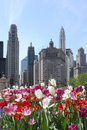 Chicago Skyline with Flowers Stock Photo