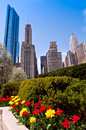 Chicago and tulips hyperfocal distance used to achieve sharp focus front to back of view of iconic buildings juxtaposed with Stock Photography