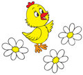 Chick and camomiles Royalty Free Stock Photo