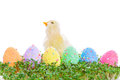 Chick colorful easter eggs garden cress Royalty Free Stock Image