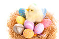 Chick colorful easter eggs nest Royalty Free Stock Image