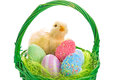Chick colorful eggs easter basket Royalty Free Stock Image