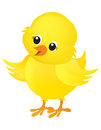 Chick illustration on white of a cute little yellow easter isolated background Stock Images