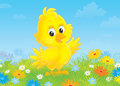 Chick little yellow nestling on a flowery meadow Stock Image
