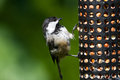 Chickadee and Bird Feeder Royalty Free Stock Photo