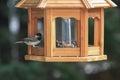 Chickadee on bird feeder Royalty Free Stock Photo