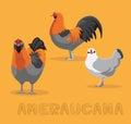 Chicken Ameraucana Cartoon Vector Illustration