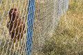 Chicken behind a wire fence Royalty Free Stock Photography