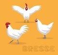Chicken Bresse Cartoon Vector Illustration