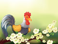 A chicken in a cherry blossom tree illustration of Stock Images