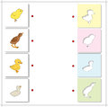 Chicken, duckling, poult and swan chick. Educational game for ki