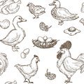 Poultry farm vector seamless sketch pattern background