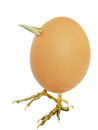 Chicken egg as bird with beak and legs isolated on white side view Royalty Free Stock Photography