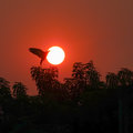 silhouette sun rise and tree with birth in the morning. Royalty Free Stock Photo