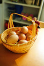 Chicken eggs in basket Stock Image