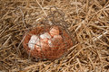 Chicken eggs in basket in straw Royalty Free Stock Photo