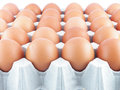Chicken eggs close up on tray Royalty Free Stock Photo