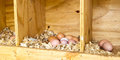 Chicken eggs home made nest boxes with freshly laid organic Royalty Free Stock Photography