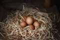 Chicken eggs in the straw nest on wooden boards. Royalty Free Stock Photo