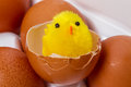 Chicken in eggshell yellow toy and eggs Royalty Free Stock Photos