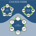 Chicken Farm Infographic Royalty Free Stock Photo