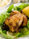 Chicken with green salad Stock Image