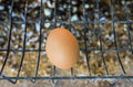 Chicken hens eggs in farm Stock Photo