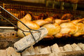 Chicken roasting whole over coals Royalty Free Stock Photo