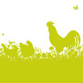 Chicken and rooster on a meadow Royalty Free Stock Photo