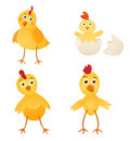 Chicken set Royalty Free Stock Photo