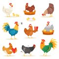 Chicken vector cartoon chick character hen and rooster in love with baby chickens or hen sitting on eggs in hen-coop