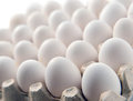 Chicken white egg in a cassette tray or carton box Royalty Free Stock Photo