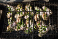 Chicken wings on the grill Royalty Free Stock Photo