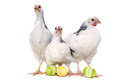 Chickens and easter eggs with isolated on a white background Royalty Free Stock Photos