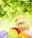Chickens and easter eggs newborn Royalty Free Stock Photography