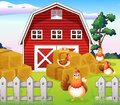 Chickens at the farm near the red barnhouse illustration of Royalty Free Stock Photos