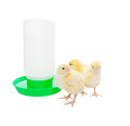 Chicks with watering container newborn near an automatic shot on white background Royalty Free Stock Photo