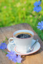 Chicory hot drink Stock Image