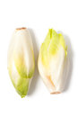 Chicory two fresh chicories isolated on white background Stock Images