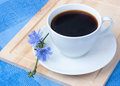 Chicory in white cup Stock Images