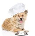Chien dans le chapeau du chef priant pour la nourriture regarder l appareil photo Photos libres de droits