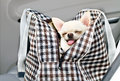 Chihuahua in bag in the car on seat of a Stock Photos